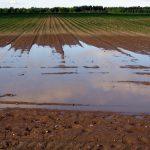 Stop Irrigation!